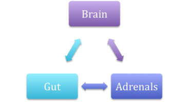 Gut-Brain-Adrenal Triangle
